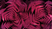 Vibrant fern background. — Stock Photo