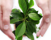 Green plant protected by hands — Stock Photo