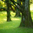 Yews wood - Stock Photo