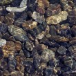 Stock Photo: Pebbles in shallow water