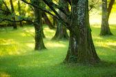 Yews wood — Stock Photo