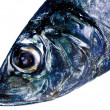 Stock Photo: Decorative fish head
