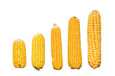 Corn graph — Stock Photo