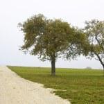 Fruit trees in the autumn mist — Stock Photo