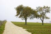 Drzewa owocowe w jesień mgła — Zdjęcie stockowe
