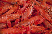 Prawns — Photo