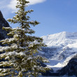 Winter in Lake Louise — Stock Photo