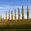 Row of Trees — Stock Photo