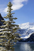 Winter in lake louise — Stockfoto