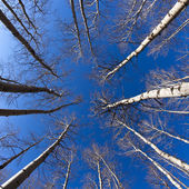 Looking Up at Trees — Stock Photo