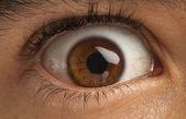 Bruin oog — Stockfoto