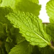 Mint — Stock Photo #10191055