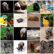 Collage of animals — Stock fotografie
