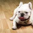 French bulldog — Stock Photo #10388492