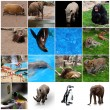 Collage of animals — Stock Photo