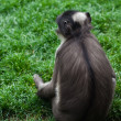Monkey — Stock Photo #10389042