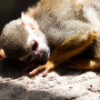 Monkey — Stock Photo #10389252