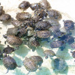 Turtles — Stock Photo #10389350