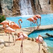 Flamingo — Stock Photo #10389379