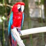 Parrot — Stock Photo #10389396