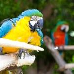 Parrot — Stock Photo #10389401