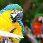 Parrot — Stock Photo #10389404