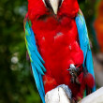 Parrot — Stock Photo #10389407