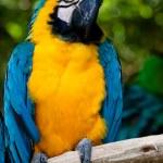 Parrot — Stock Photo #10389410
