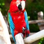 Parrot — Stock Photo #10389417