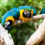papugowate — Zdjęcie stockowe