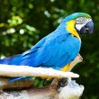 Macaws - Stock Photo