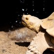Big turtle — Stock Photo