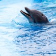 Dolphin — Stock Photo #10389448