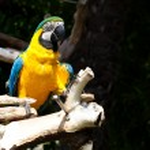 Parrot — Stock Photo #10389469