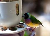Little bird eating — Stock Photo