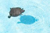 Tartaruga nuoto — Foto Stock