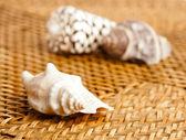 Shell en textura de mimbre — Foto de Stock