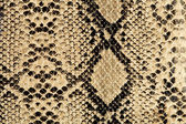 Snake texture — Stock Photo