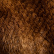 Stock Photo: Mink texture
