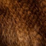 Mink texture — Stock Photo