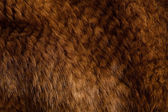 Mink texture — Stock Photo