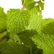 Mint — Stock Photo #10561395