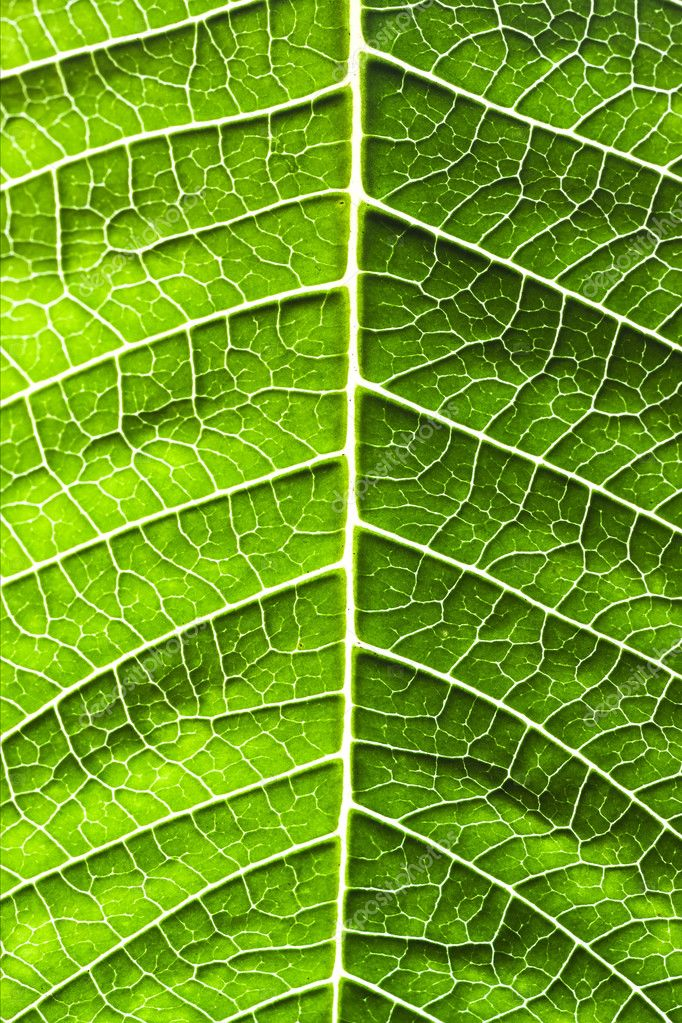 Leaf of a plant close up  Stock Photo #8479949