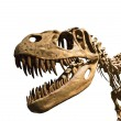 Esqueleto de tiranosaurio Rex — Stock Photo #9198573