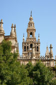 Seville Cathedral detail — Stock Photo