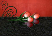 Rote tulpen mit reflexion und wirbel — Stockfoto
