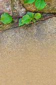 Verse lente leaf op oude stonewall met copyspace — Stockfoto