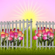 Stock Photo: Morning in garden tulip and fence