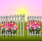 Morning in the garden tulip and fence — Stock Photo