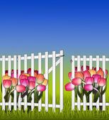 Sunny day in the garden fence gate and tulips — Stock Photo